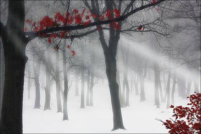 Red Leaves Photograph - Alone In The Forest by Tom York Images