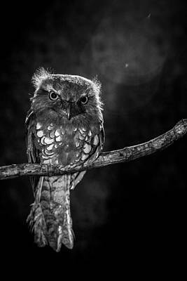 Baby Bird Photograph - Alone In The Night by Wilianto