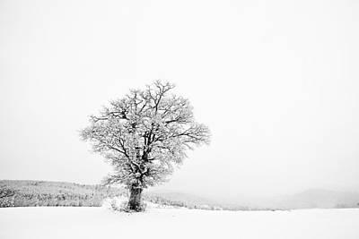 Photograph - Alone In Winter by Svetoslav Sokolov