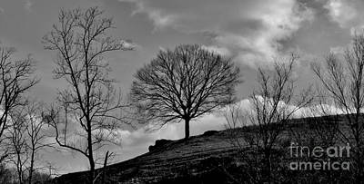 Photograph - Alone On A Hill by Hominy Valley Photography