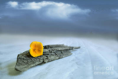 Alone On The Beach Art Print by Veikko Suikkanen