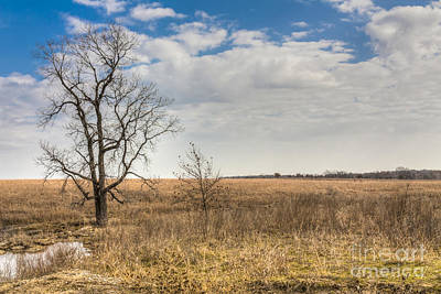 Photograph - Alone On The Prairie by David Cutts