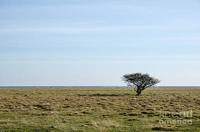 Photograph - Alone Tree At A Coastal Grassland by Kennerth and Birgitta Kullman