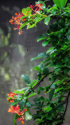 Photograph - Along Came A Spider by Bill Wakeley