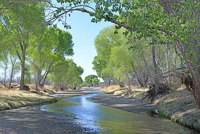 Photograph - Along San Pedro River by Alan Lenk