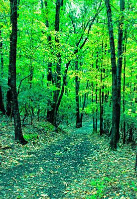 Photograph - Along The Autumn Path by Gary Slawsky