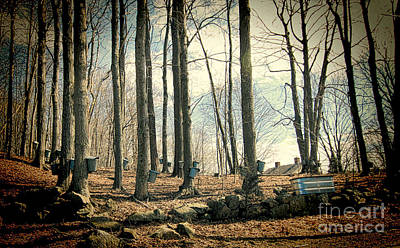 Sugaring Season Photograph - Along The Back Roads by K Hines