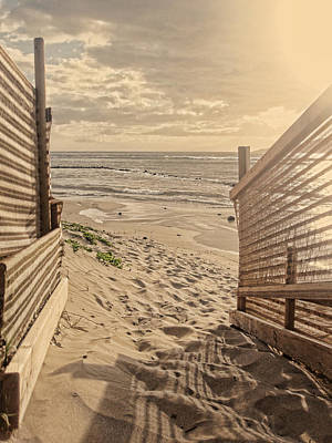Photograph - Along The Beach by Marilyn Wilson