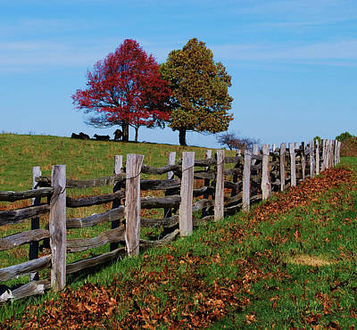 Along The Fence Art Print by Eric Liller