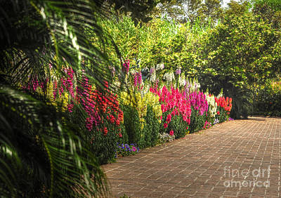 Photograph - Along The Garden Path by Kathy Baccari