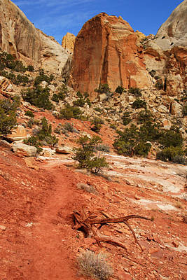 Photograph - Along The Golden Throne Trail by Daniel Woodrum
