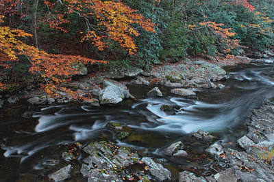 Photograph - Along The Little River by Shari Jardina