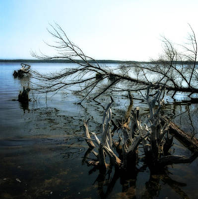 Tree Roots Photograph - Along The Lost Lake Trail by Michelle Calkins