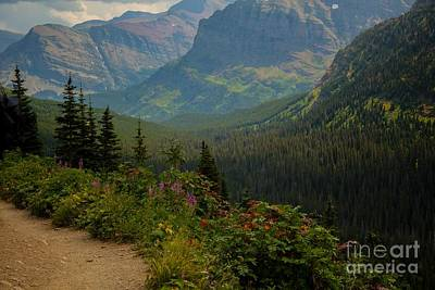 Along The Path To Iceburg Lake 21 Art Print by Natural Focal Point Photography