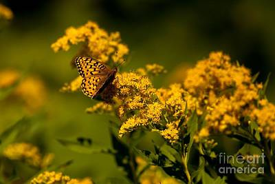 Butterfly Photograph - Along The Path To Running Eagle 2 by Natural Focal Point Photography