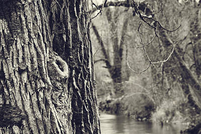 Photograph - Along The River by Bonnie Bruno