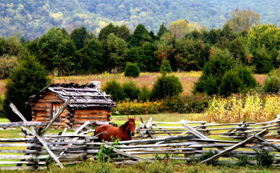 Kentucky Horse Park Photograph - Along The Wilderness Trail by Karen Wiles