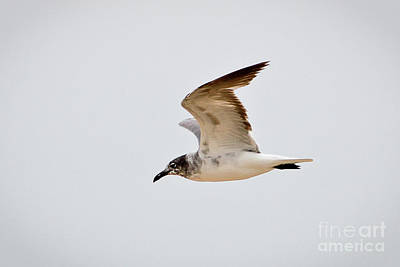 Photograph - Alongside - Seagull by John Waclo