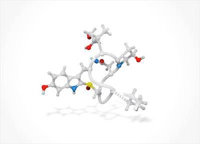 Toxins Photograph - Alpha-amanitin Toxin Molecule by Ramon Andrade 3dciencia