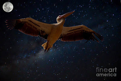 Photograph - Alpha Centauri Pelican by Mareko Marciniak