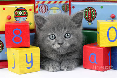 Kitten Digital Art - Alphabet Cat Ck415 by Greg Cuddiford