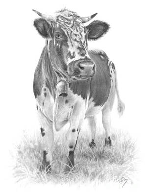 Drawing - Alpine Cow by Chris Mosley