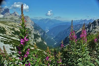 Pop Art - Alpine Limestone Fireweed Vista by David Broome