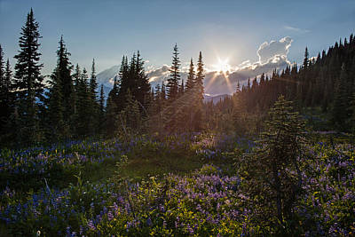 Alpine Meadow Sunrays Print by Mike Reid