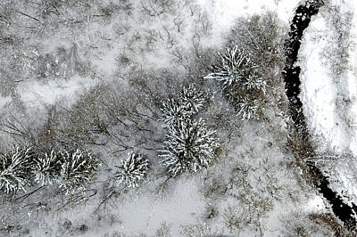 Alpine Snow Trees Art Print by Stephen Richards
