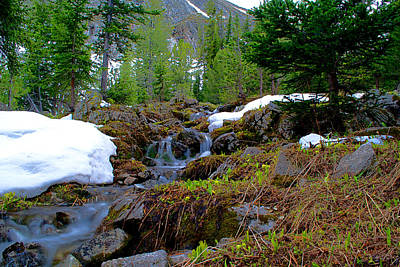 Art Print featuring the photograph Alpine Spring  by Kevin Bone