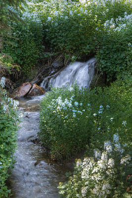 Photograph - Alpine Stream by Utah Images