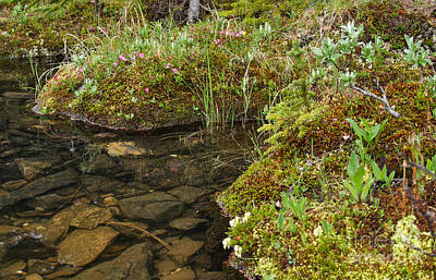 Photograph - Alpine Vegetation by Charles Kozierok