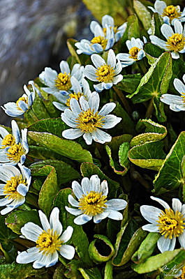 Photograph - Alpine Wildflowers 2 by Aaron Spong