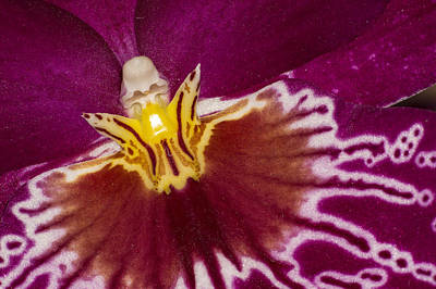 Photograph - Alright Orchid by Bob Kemp