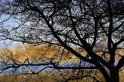 Alsea Bay Tree Print by Carol Leigh