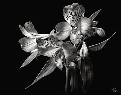 Photograph - Alstroemeria 2 In Black And Whtie by Endre Balogh