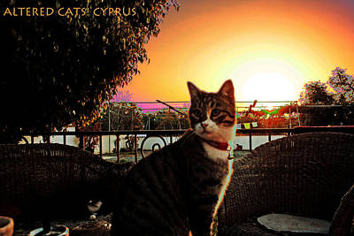 Photograph - Altered Cats Cyprus Rudolph by Artists for Altered Cats Cyprus