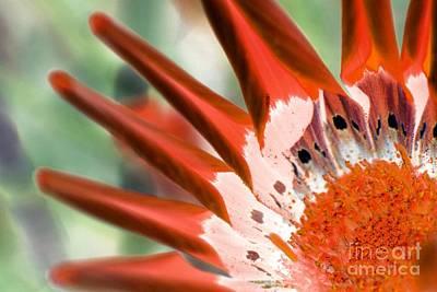 Giuseppe Cristiano - Altered Flower - 29 by Andrew Hewett