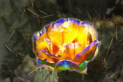 Altered Yellow Prickly Pear Flower Original