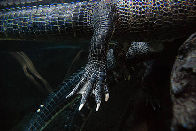 Photograph - Alternate Alligator View by Beverly Stapleton
