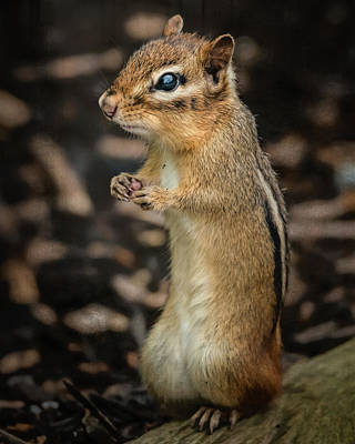 Art Print featuring the photograph Alvin by Linda Karlin
