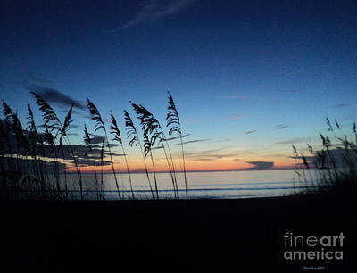 St. Lucie County Photograph - Always In Season by Megan Dirsa-DuBois