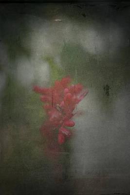 Photograph - Always Near by Mark  Ross