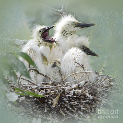Three Chicks Photograph - Always One In A Crowd by Betty LaRue