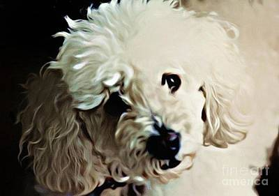 Poodle Digital Art - Always Remembered by John Malone