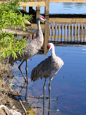 Crane Photograph - Always Together by Zina Stromberg