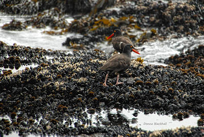 Photograph - Always Walking On Shells With You by Donna Blackhall