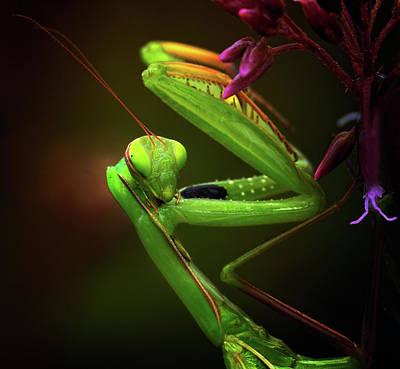 Bug Photograph - Am I Cute? by Izidor Gasperlin