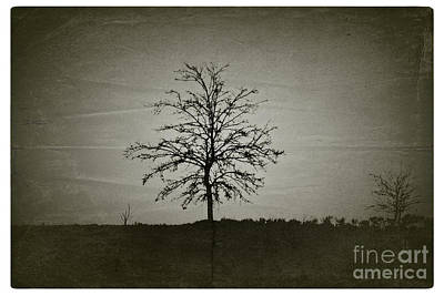 Am Trees - No.226 Art Print by Joe Finney