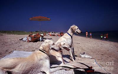 Amagansett Beach Borzoi Dogs Art Print by Ros Drinkwater